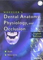 Wheeler's Dental Anatomy, Physiology and Occlusion (Ash, M. M. - Nelson, S. J.)